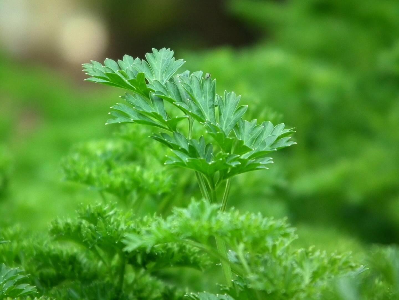 Welche pflanzlichen Lebensmittel enthalten viel Eisen?